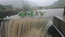 豪雨成災 芋頭田淹成游泳池