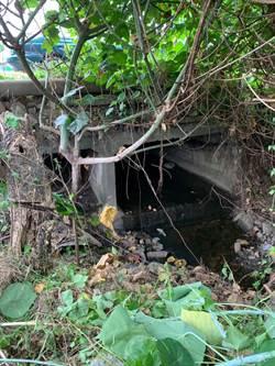 區域排水10多年未整理邊坡坍塌危險