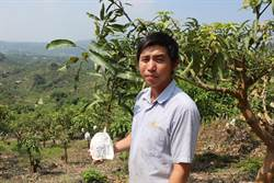 產銷班前輩經驗傳承 南化青農種出1顆千元愛文
