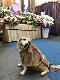 狗兒穿喪服參加主人葬禮 一個舉動讓3萬人爆哭