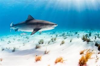 懷孕鯊魚做體檢 影像讓科學家驚呆