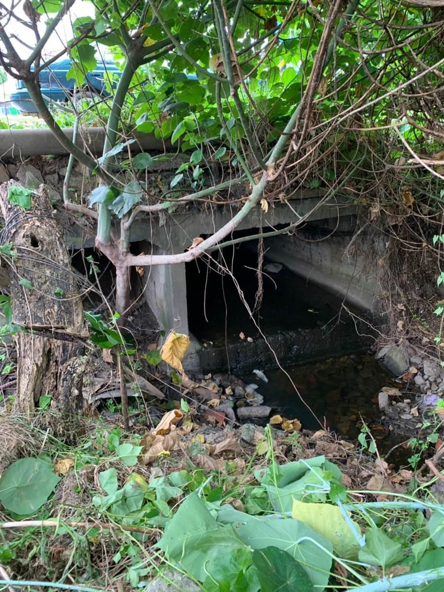 台中市大肚區自由路靠近沙田路的區域排水,因多年未整理,整片土地宛如小叢林。(林欣儀攝)