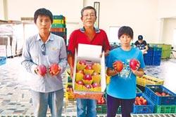 青農返鄉 種出高價大芒果