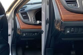 車內驚見「30腳怪蟲」網揭妙用