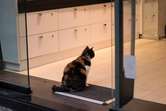 貓坐門口趕不走 員工一看日曆驚了