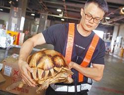 地表最貴烏龜 誆熱帶魚走私來台