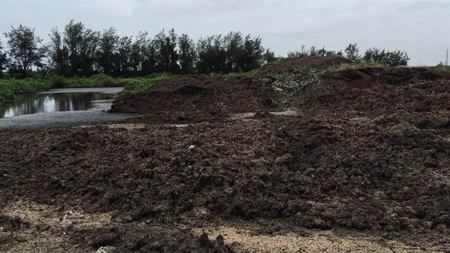 芳苑鄉一處農田遭大量傾倒棄置食品加工汙泥,宛如大型露天堆肥場,滿地溢出黑色液體,還散發濃濃惡臭令人作嘔。(謝瓊雲攝)