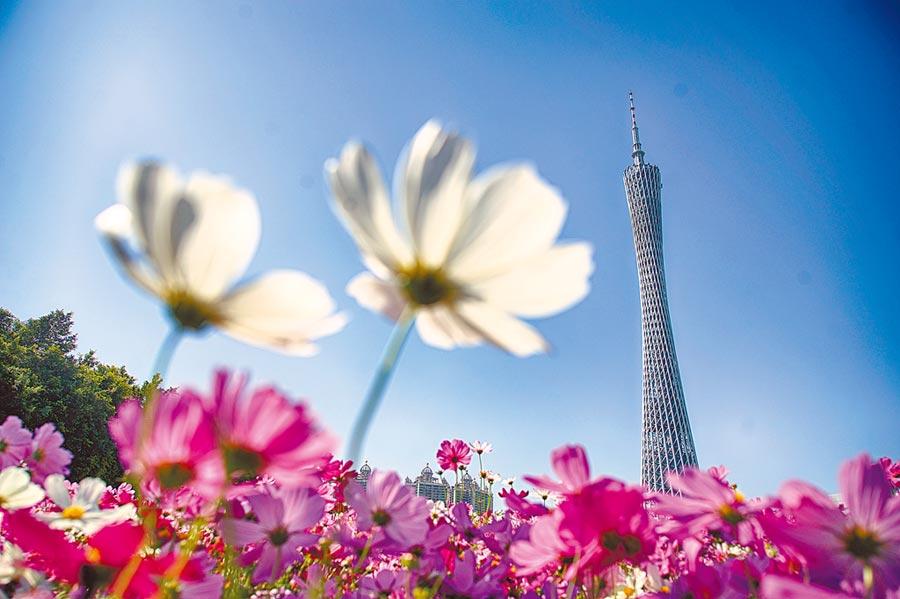 廣州市海心沙公園拍攝的花朵與廣州塔相互映襯。(新華社)