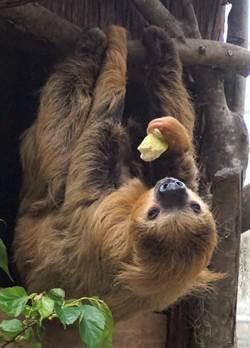 急驚風遇上慢郎中  動物園上演美食爭奪戰