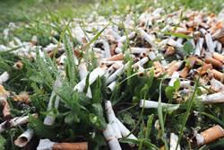 菸蒂是有毒垃圾 會危害植物生長