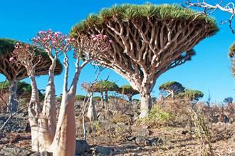 神秘島隔絕2千年 樹如飛碟會流血
