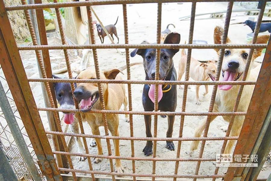 某校犬咬傷女童,校長及社團獲不起訴。(示意圖非本新聞/本報系資料照)