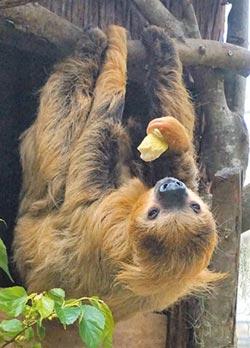 急驚風慢郎中 動物園美食爭奪戰