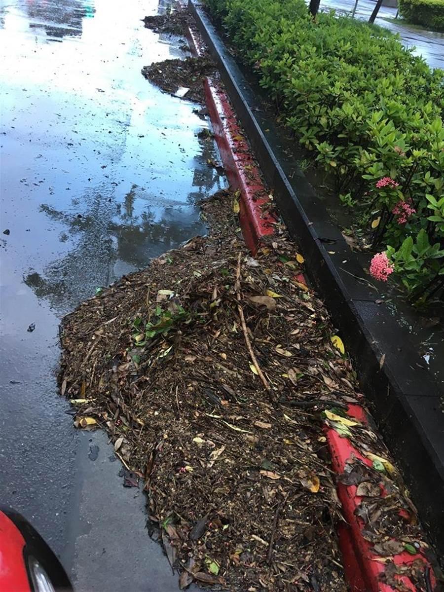 大安森林公園疑因排水孔遭大量斷枝殘葉堵塞,導致淹水,但公園處事後澄清是因雨勢太大,持續打下樹葉,部分排水口上才會出現落葉。(讀者提供)