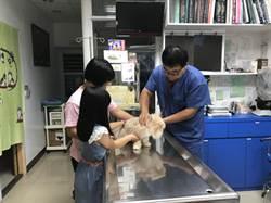 基隆貓狗絕育補助 增800名額