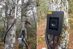 黑熊勿入!台東林管處在向陽山屋設黑熊預警系統