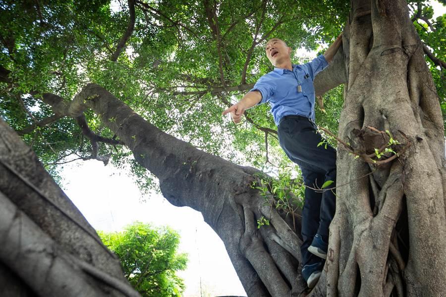 高雄市長韓國瑜24日上午視察登革熱疫區,親自爬樹察看,表示「樹洞會有積水,會長蚊子」。(袁庭堯攝)