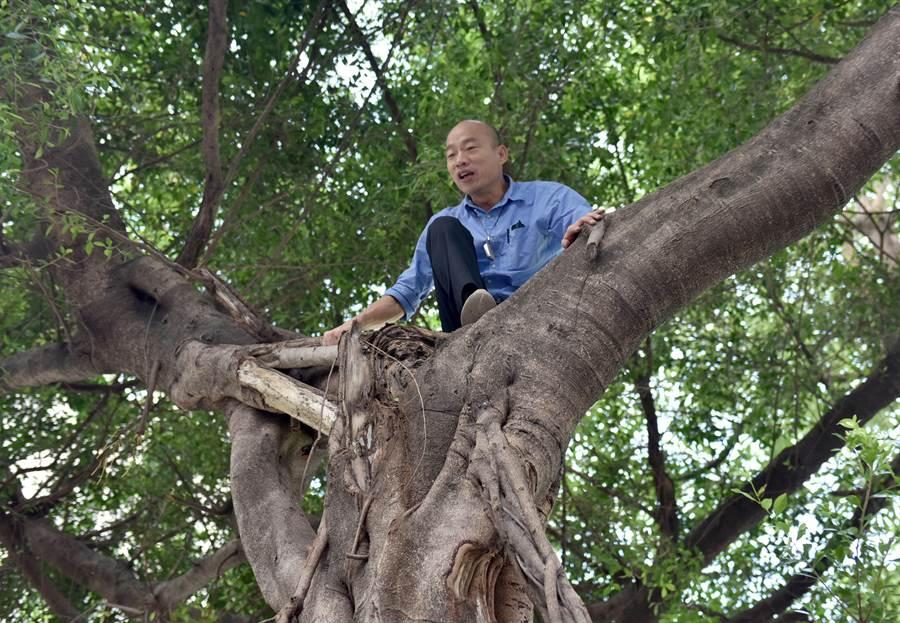 韓國瑜察看登革熱防疫工作,爬上樹木查看樹洞,了解登革熱病媒蚊孳生源。專家呼籲民眾應盡快封填樹洞以防夏季到了病媒蚊藉樹洞孳生。(圖/中央社)