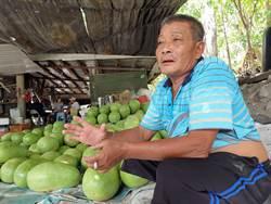 3萬多顆西瓜滯銷 瓜農擔心血本無歸