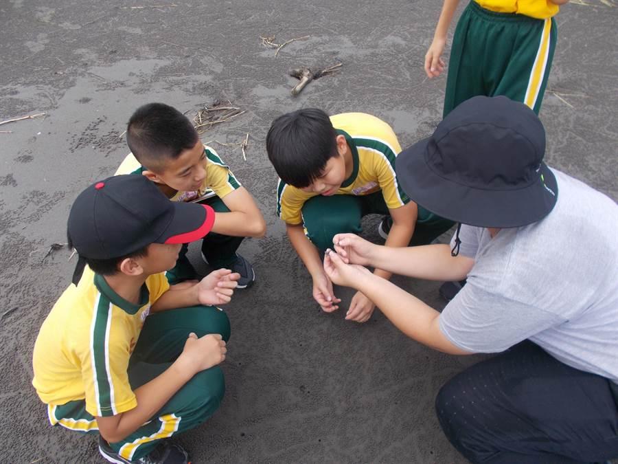 大安濱海樂園環境教育志工,免費培訓課程,歡迎踴躍報名。(陳世宗翻攝)