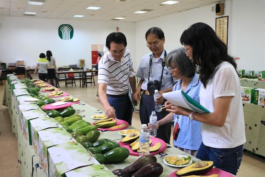 竹崎地区农会25日举办酪梨评鉴,评审现场试吃,针对外观、果肉色泽、风味及水分含量评分。