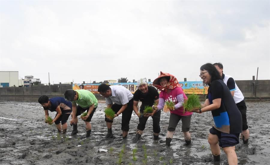 彰化县长王惠美也捲起裤管亲自下田与学童们一起插秧。