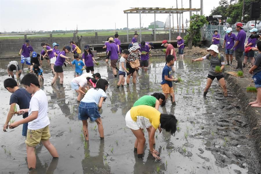 彰化縣食農教育夏令營25日在二林鎮香田國小的自有生態稻田裡展開,200多名小朋友一起體驗插秧。(謝瓊雲攝)
