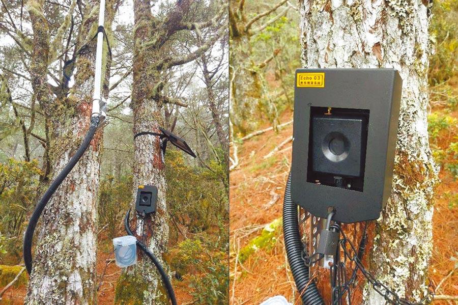 嘉明湖國家步道近年來常有台灣黑熊造訪,為了預防人熊衝突,台東林管處建置監測通報系統正式啟用。(台東林管處提供)
