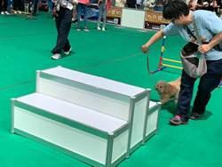 高雄巨蛋寵物展今登場 打造消暑「寵物水樂園」