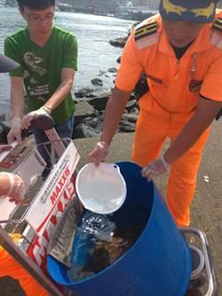 漁民誤捕海龜 海巡協助野放