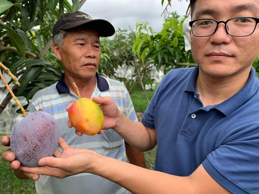 台東農產品將瞄準大陸市場。(楊漢聲翻攝)