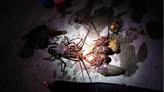 龍蝦、軟絲遇劫 潛水客保育區狂抓遭函送