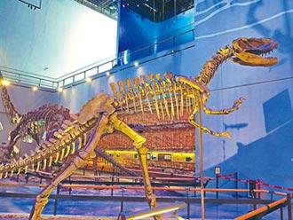 暑假不一樣 男童發現恐龍蛋化石