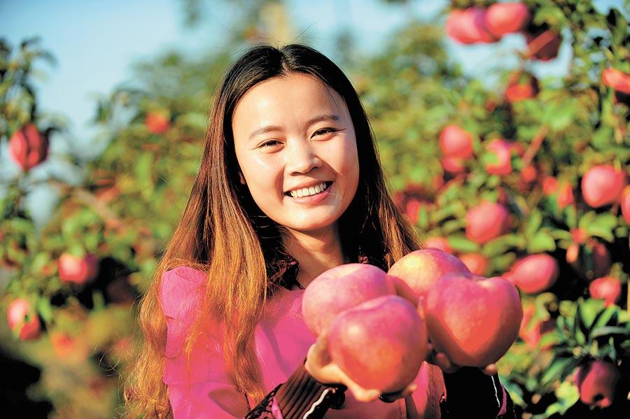 多吃水果有通便作用,圖為瀋陽農業大學的學生展示剛採摘的蘋果。(新華社資料照片)