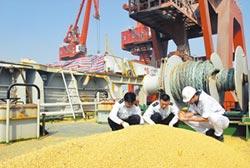 陸或加購美農產 大豆棉花期價揚