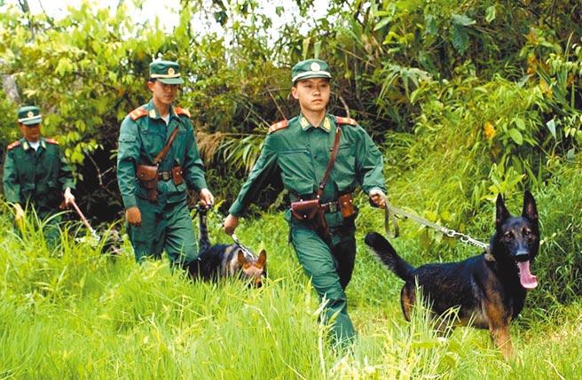 雲南公安邊防總隊德宏支隊戰士帶緝毒犬在邊境叢林地區搜查毒品。(新華社資料照片)