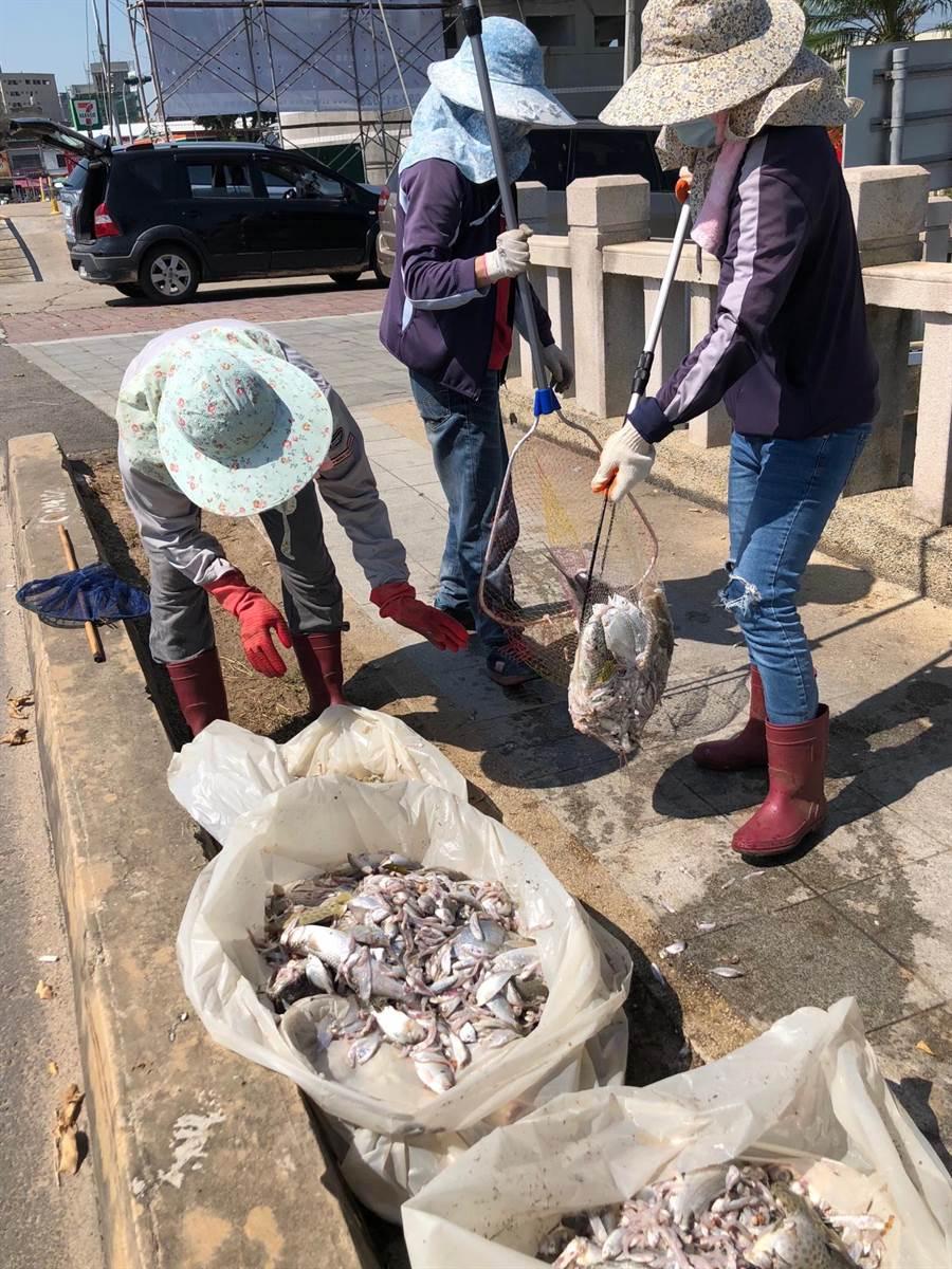 縣養工所派員打撈死魚,並持續注意湖面狀況。(李金生攝)