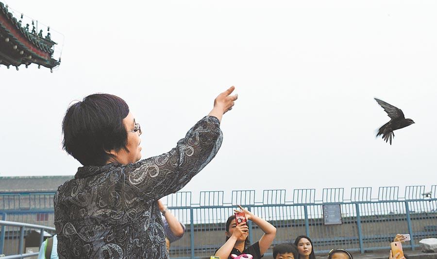 近日,北京市野生動物救護中心工作人員來到正陽門城樓上檢查了兩隻被救雨燕的健康狀況並確認合格後,將它們輕輕放飛。(胡鐵湘攝)