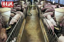 2億豬肉缺口怎麼補? 台守住防線成大贏家