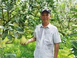勇於創新 麻豆柚農林建良獲產銷履歷達人獎