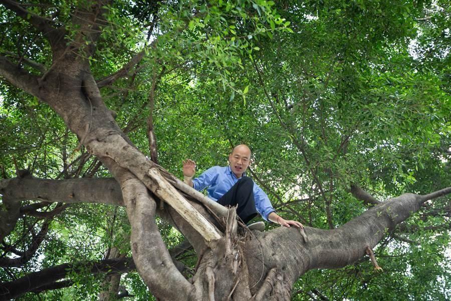 高雄市長韓國瑜昨為了視察噴藥防疫工作,攀上近2層樓高的大樹,要看看樹洞積水的狀況。(資料照,袁庭堯攝)
