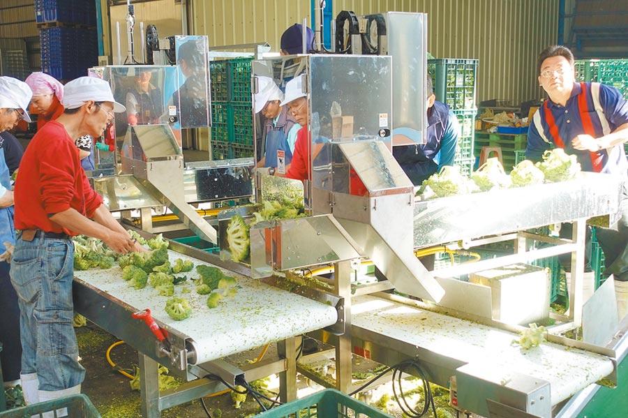 農委會修正《農產品生產及驗證管理法》,後續亦將研擬「農產品初級加工場管理辦法」,讓農民取得「初級加工場」登記。(本報資料照片)