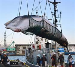 日本重啟捕鯨滿月 但需求仍不振
