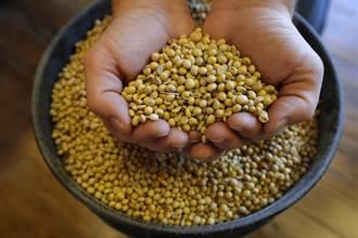 對美新籌碼?最大豆粕出口國 有望進陸市場