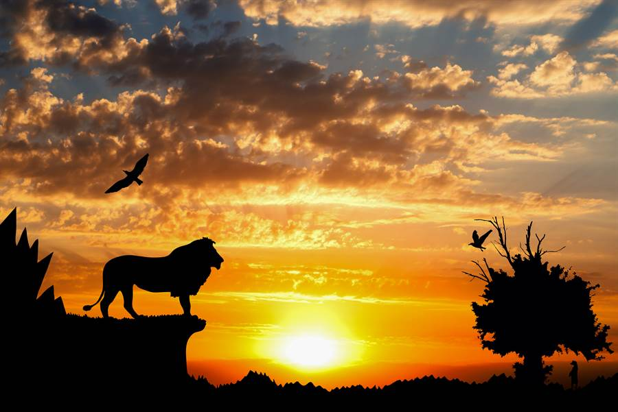 對驢子唱《獅子王》主題曲 下秒反應好驚人(示意圖/達志影像)