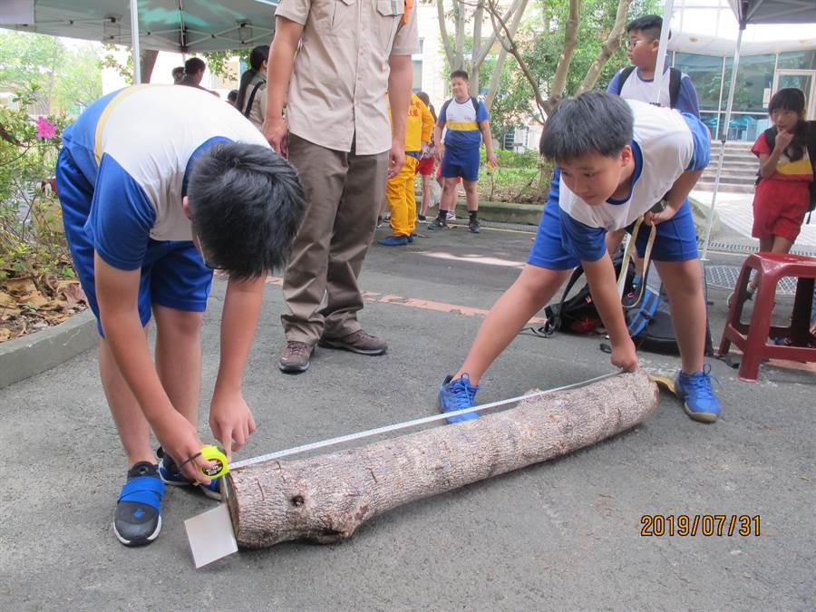 學童進行木材檢尺體驗。(陳世宗翻攝)