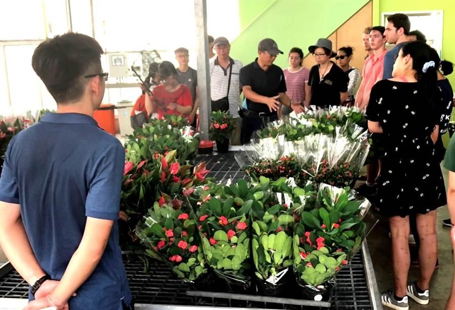 美國大學生一行前往陽昇園藝,參觀隱藏版花卉冠軍場區並由彭總逐一詳加解說。(楊樹煌攝)