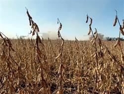 8成農民等嘸 老美撒3730億擋大豆牌卻出糗