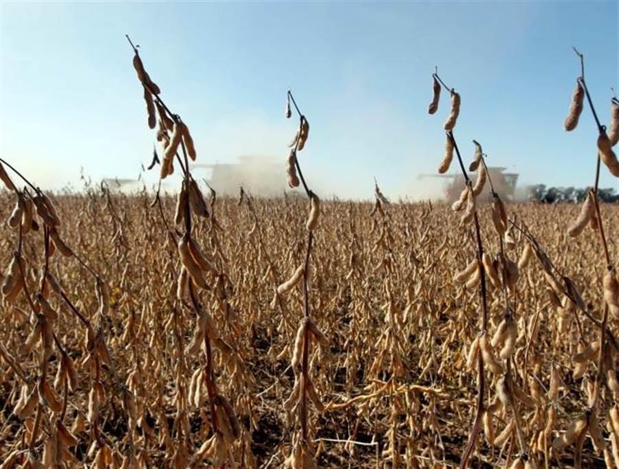 陸美貿易戰以種植大豆的農民受害最深,美國政府推出新一輪農業補助,但補助卻集中到較為富裕的農民。(圖/本報資料照片)