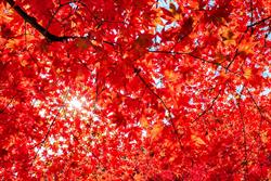 預約秋季賞楓行程 關西穿梭古今如畫如夢最精采